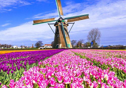 Moulins tulipes 2